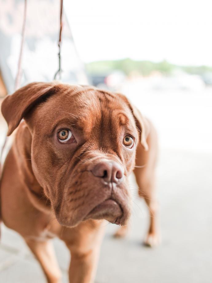 Oferty pracy dla opiekunów zwierząt oraz ogłoszenia pet sitterów